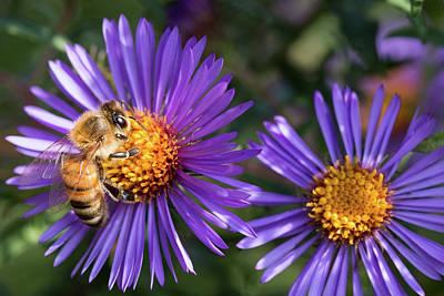 Bee Or Purple Flower Art Print by Steve Konya II