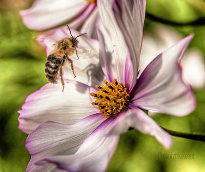 Photograph - Bee Shadow.... by Paul Vitko