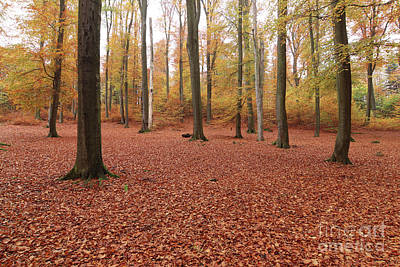 Photograph - Beech Forest In Autumn by Michal Boubin