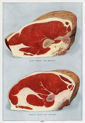 Drawing - Beef Sirloins by Unknown