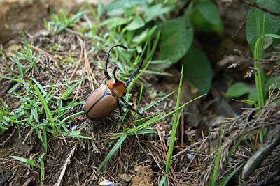 Digital Art - Beetle Along The Path In Huancas by Carol Ailles