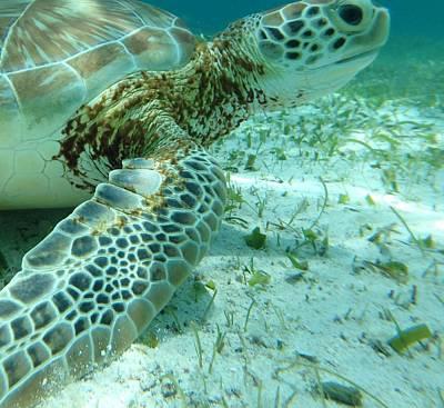 When Life Gives You Lemons - Belize Turtle  by Dan Podsobinski