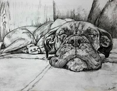 Boxer Puppy Drawing - Bella Bean by Trek Wear Canada