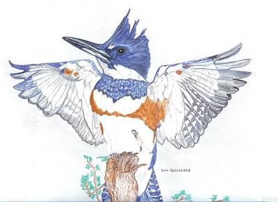 Stellar Jay Drawing - Belted Kingfisher by Don  Gallacher