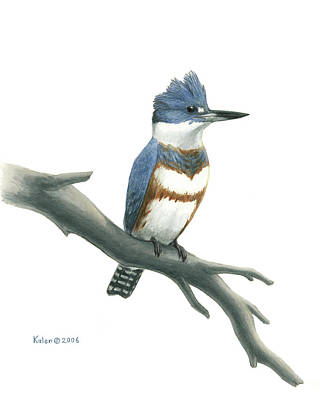 Belted Kingfisher Perched Art Print