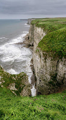 Razorbill Wall Art - Photograph - Bempton Cliffs by Nigel Wooding