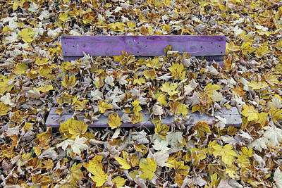 Falltime Photograph - Bench Covered In Fallen Leaves by Michal Boubin
