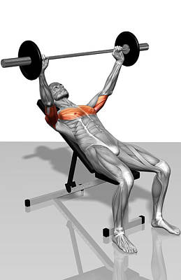 Photograph - Bench Press Incline (part 1 Of 2) by MedicalRF.com