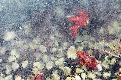 Photograph - Beneath The Surface by Shawna Rowe