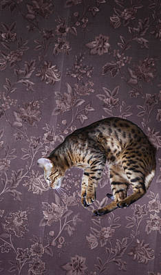 Photograph - Bengal Cat Jumping by Alex Potemkin