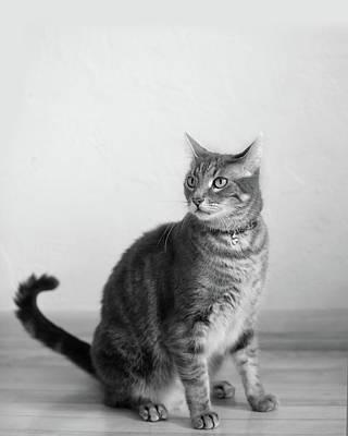 Photograph - Bennu 11a by Rebecca Cozart