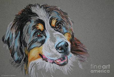 Pastel - Bernese Mountain Dog by Susan Herber