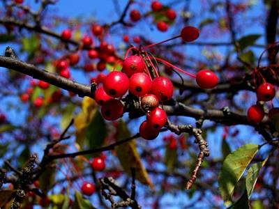 Photograph - Berries by Michiale Schneider