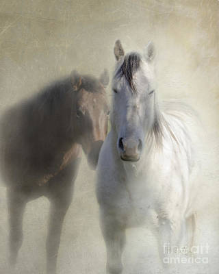 Two Horses Photograph - Best Friends by Betty LaRue