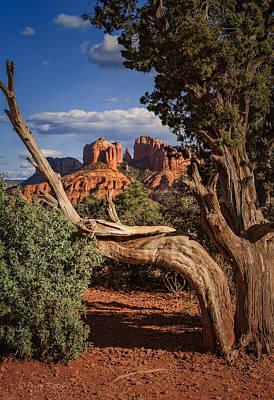 Cathedral Rock Wall Art - Photograph - Beyond The Shaggy Bark Juniper by Medicine Tree Studios