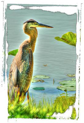 Photograph - Big Bird by Sam Davis Johnson