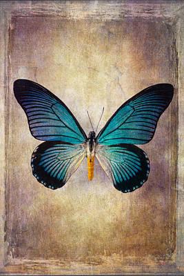 Big Blue Wings Art Print by Garry Gay