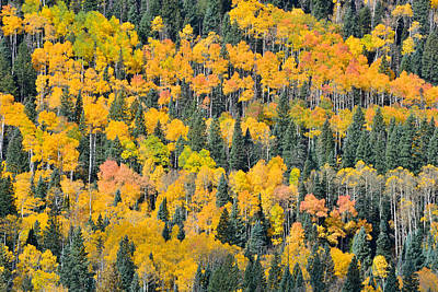 Photograph - Big Cimarron Aspens by Ray Mathis