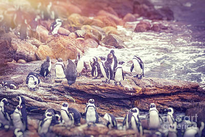 Photograph - Big Family Of Penguins by Anna Om