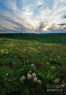 Big Meadows Photograph - Big Headed Clover Sunset by Mike Dawson