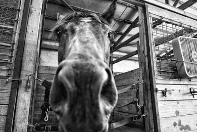 Photograph - Big Nose  by Joseph Caban