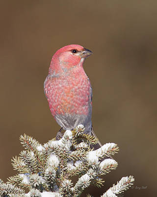 Photograph - Big Red by Gerry Sibell