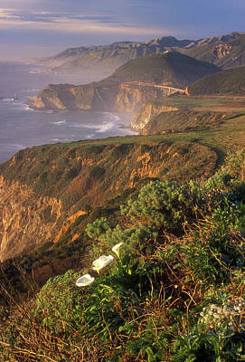 Photograph - Big Sur Coast Wild Calla by John Burk