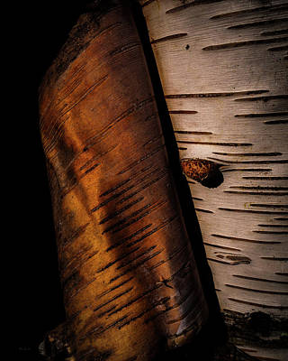 Photograph - Birch  by Bob Orsillo