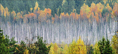 Photograph - Birch Trees by Vladimir Kholostykh
