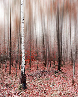 Print featuring the photograph Birchforest In Fall by Hannes Cmarits