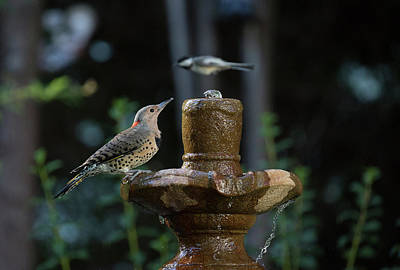 Photograph - Bird 2 by Michel DesRoches