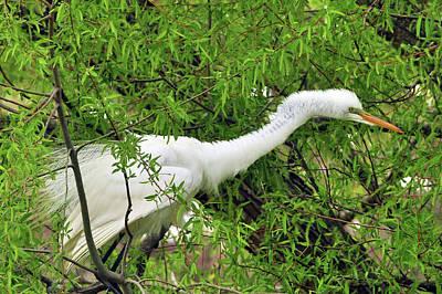 Photograph - Bird In A Bush by Helen Haw