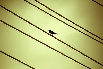 Photograph - Bird On A Wire by Marilyn Hunt