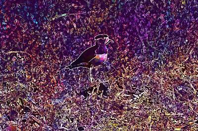 Lapwing Digital Art - Bird Yellow Wattled Lapwing  by PixBreak Art
