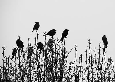 Photograph - Birdies by Cheryl McClure