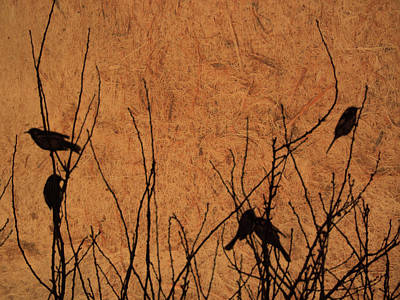 Photograph - Birds by Mark Blauhoefer