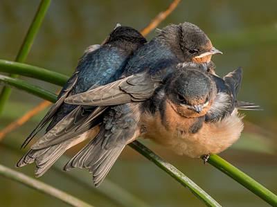 Photograph - Birds Of A Feather by Derek Dean