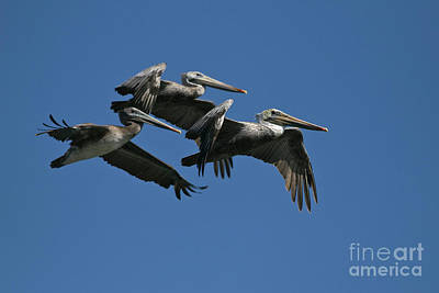 Photograph - Birds_d105 by Craig Lovell