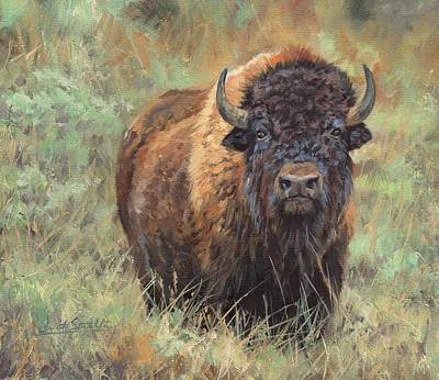 Painting - Bison by David Stribbling