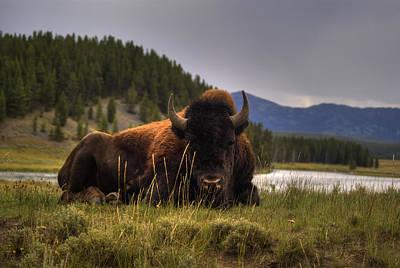 Bison Art Print by Patrick  Flynn