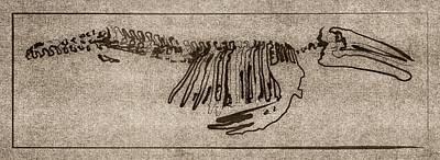 New Years - Whale Skeletal Sketch Art by Brett Pfister