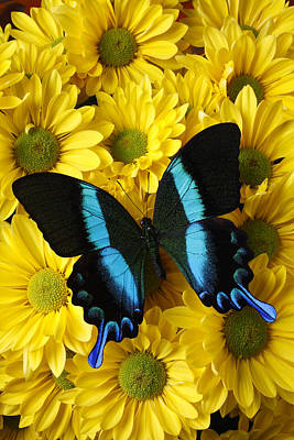 Black And Blue Butterfly Art Print by Garry Gay