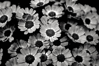 Photograph - Black And White Flowers by Sumit Mehndiratta