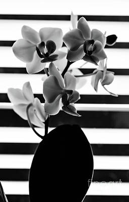 Photograph - Black And White Orchid by Gerald Kloss