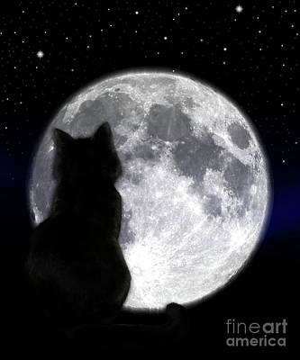 Photograph - Black Cat And Full Moon by Nina Ficur Feenan