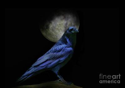 Medicine Crow Photograph - Black Magic by Stephanie Laird
