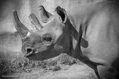 Photograph - Black Rhino by LeeAnn McLaneGoetz McLaneGoetzStudioLLCcom