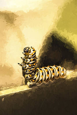 Photograph - Dancing Black Swallowtail Butterfly Caterpillar  by Kay Brewer