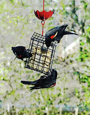 Photograph - Blackbird Brunch by Lizi Beard-Ward