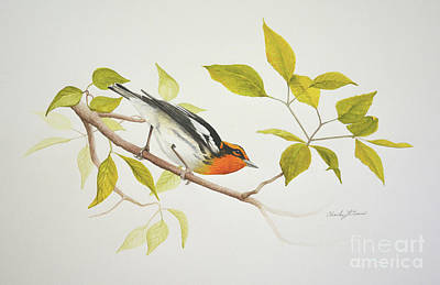 Painting - Blackburnian Warbler by Charles Owens